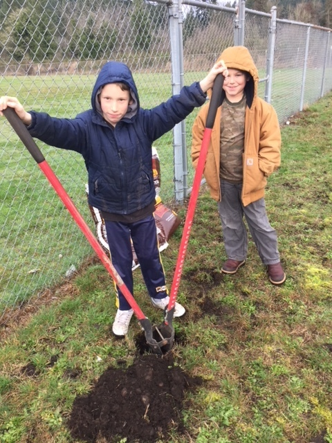 Dipping holes for fruit trees.